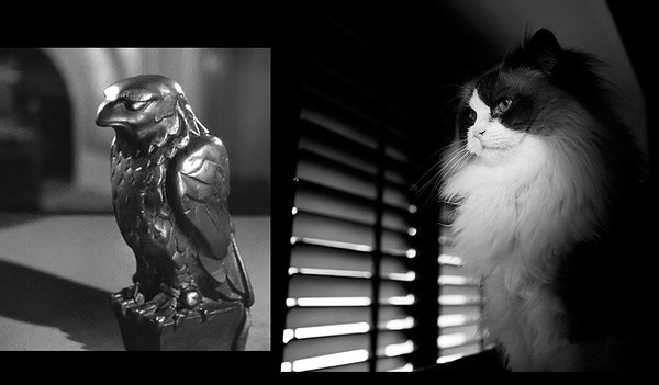 StyleIt Group Noir spotlight Study entry.  My Maltese Kitty.